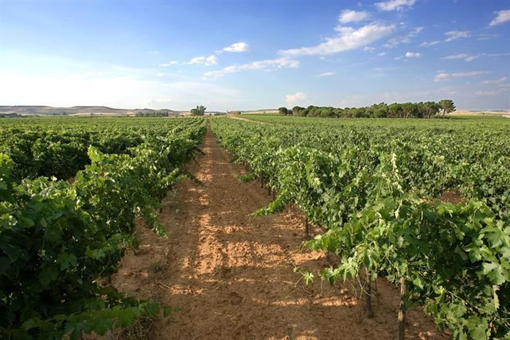 Additional photo for property listing at Winery/Vineyard for sale in D.O. Ribera del Duero Burgos, Spain
