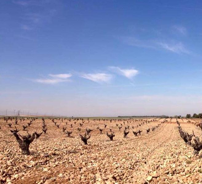 Vineyard for Sale at Winery/Vineyard for sale in D.O. Toro Spain