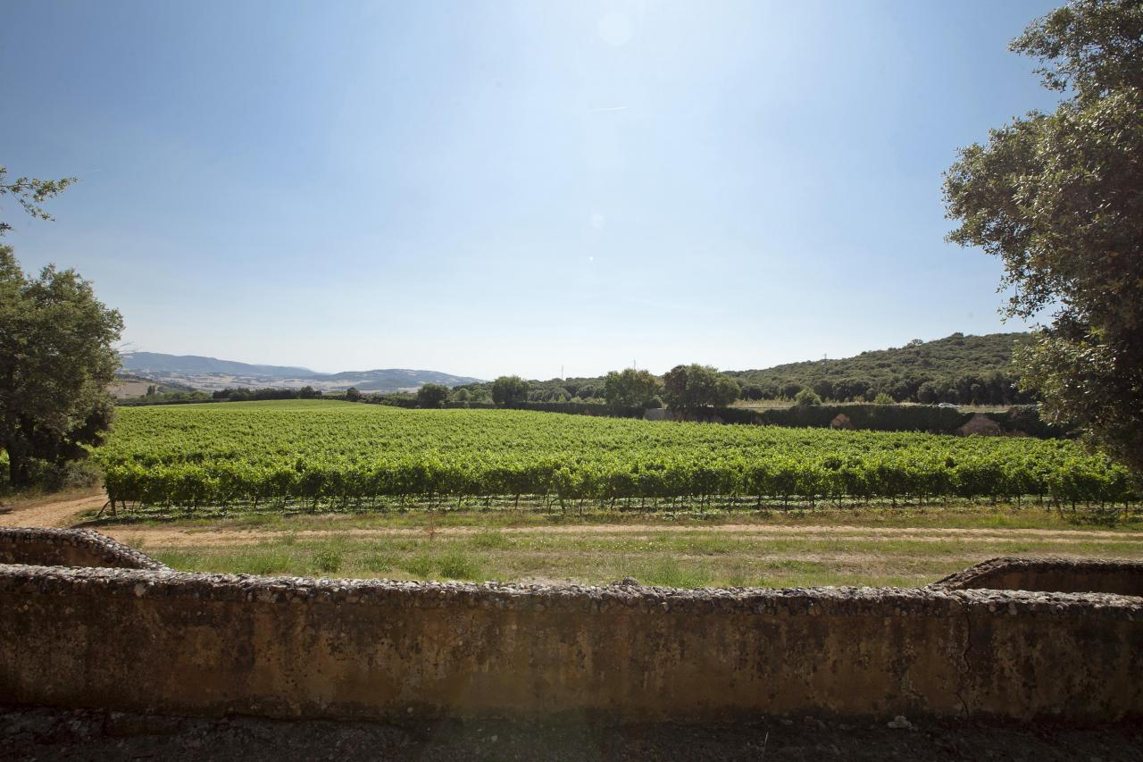 Additional photo for property listing at Winery/Vineyard for sale in D.O. Navarra Spain