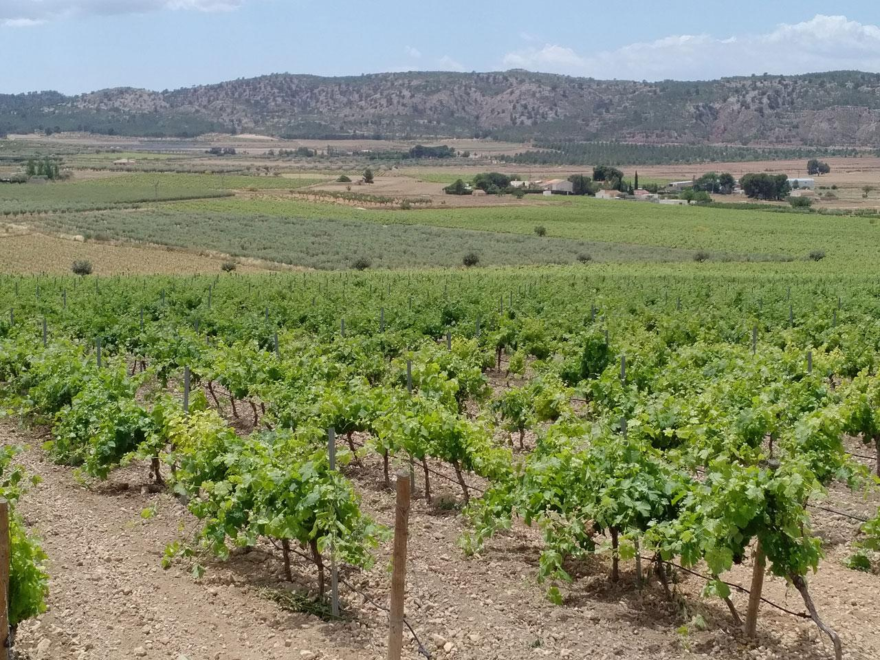 Viñedo por un Venta en Winery/Vineyard for sale in Murcia Murcia, España