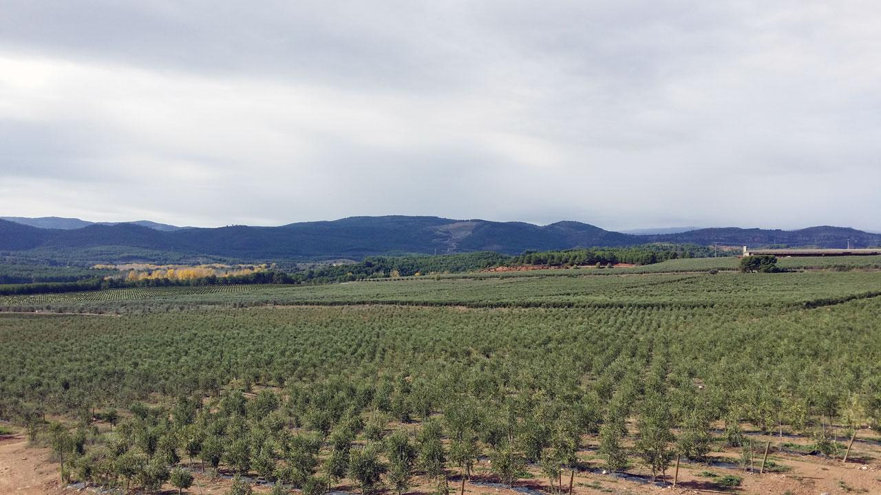 Additional photo for property listing at Olive grove for sale in Segorbe Castellon, Espagne