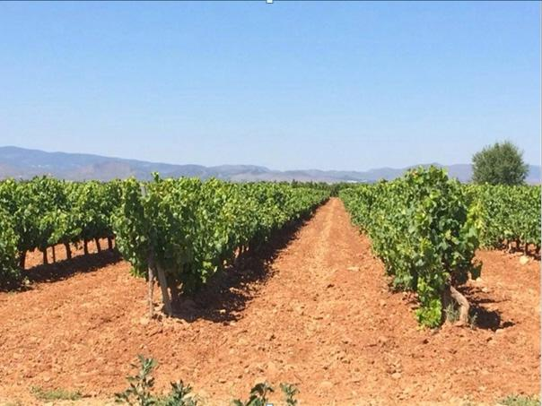 Vineyard for Sale at Winery/Vineyard for sale in D.O. Cariñena Spain