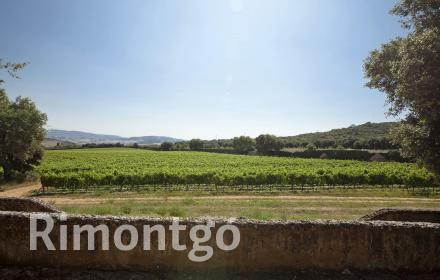 Winery with vineyards and historical house in DO Navarra.