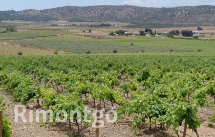 Winery for sale in Murcia City