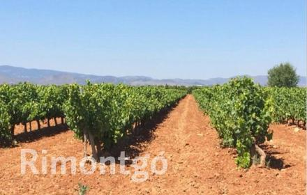 Winery for sale in D.O. Cariñena, Zaragoza