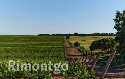 Winery for sale in El Bonillo, Albacete