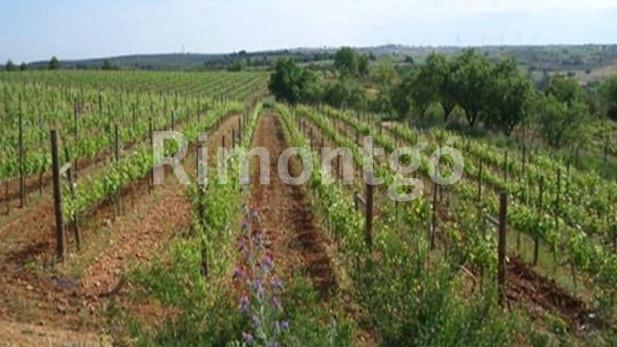 Winery for sale in D.O. Madrid, Madrid
