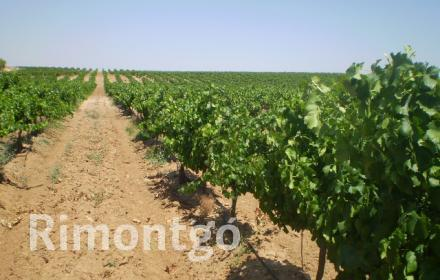 Winery for sale in Villatobas, Toledo