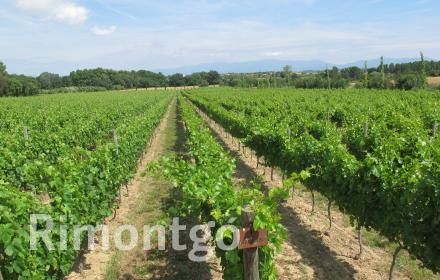 Winery for sale in Figueres, Girona