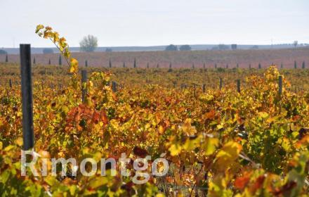 Winery for sale in D.O. La Mancha, Ciudad Real