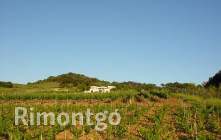 Winery for sale in Ronda, Malaga and Costa del Sol