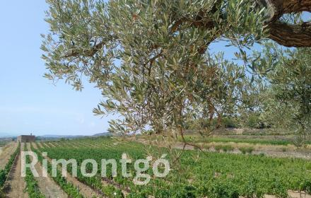 Winery for sale in D.O. Cataluña, Tarragona