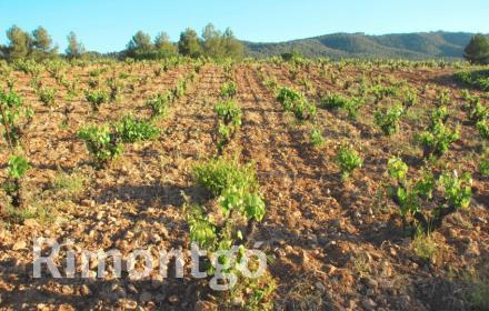 Winery for sale in D.O. Bullas, Murcia