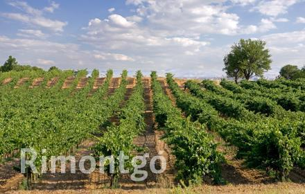 Winery for sale in D.O. Ribera de Duero, Valladolid