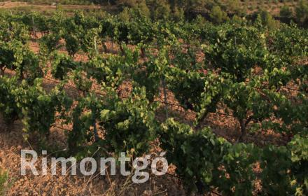 Winery for sale in D.O. Monsant, Tarragona