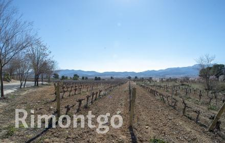 Winery for sale in D.O. Jumilla, Murcia