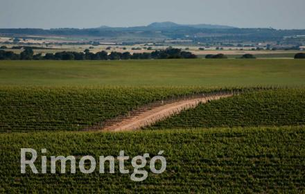 Winery with hotel and restaurant for sale in the province of Murcia.
