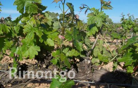 Winery for sale in D.O. Somontano, Huesca